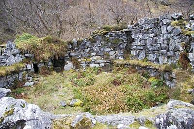 Inside the broch showing that its overgrown and original